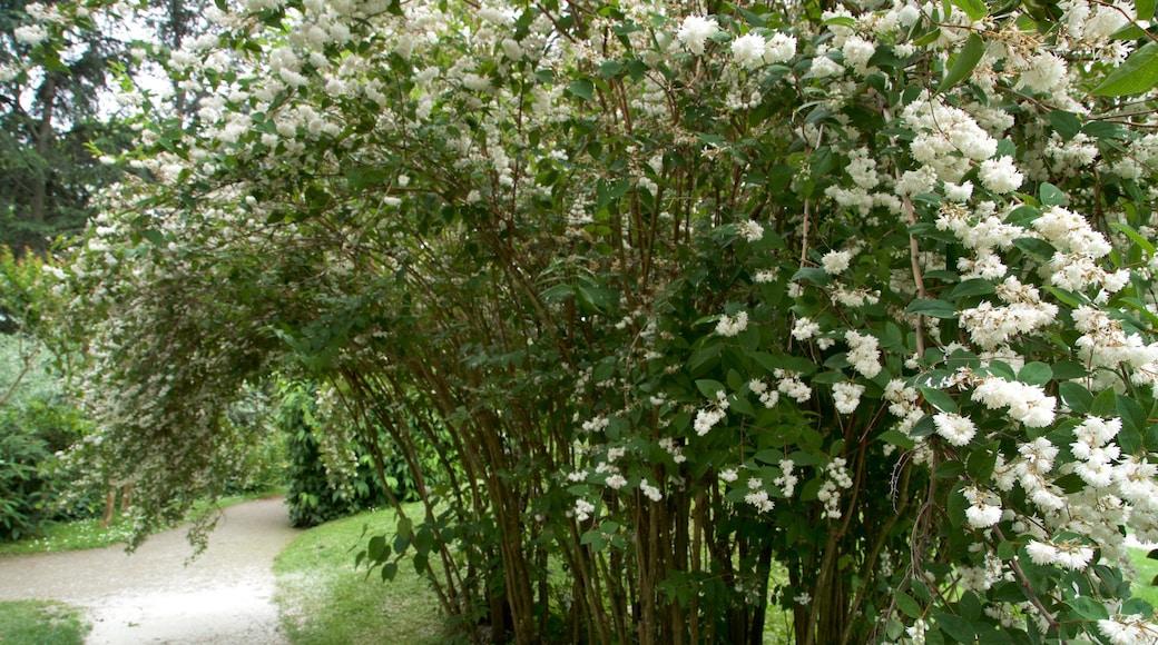 Jardin japonais de Toulouse mettant en vedette jardin et fleurs sauvages