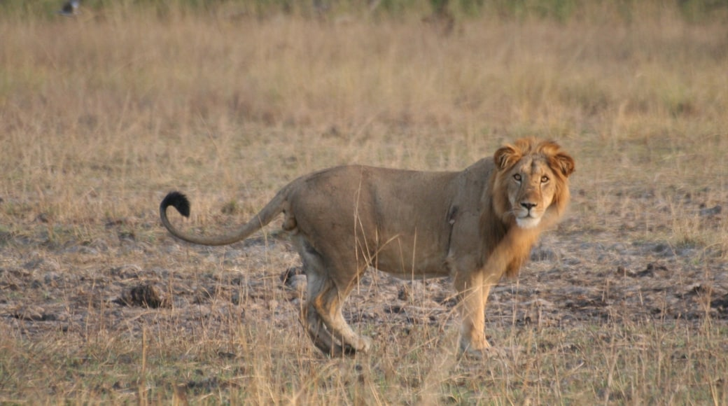Abomey which includes land animals and dangerous animals