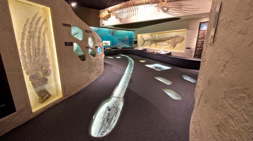 內布拉斯加大學國家博物館 设有 內部景觀
