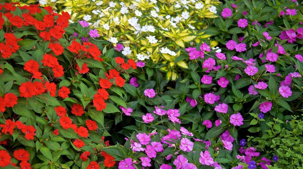 Sunken Gardens showing wild flowers and flowers