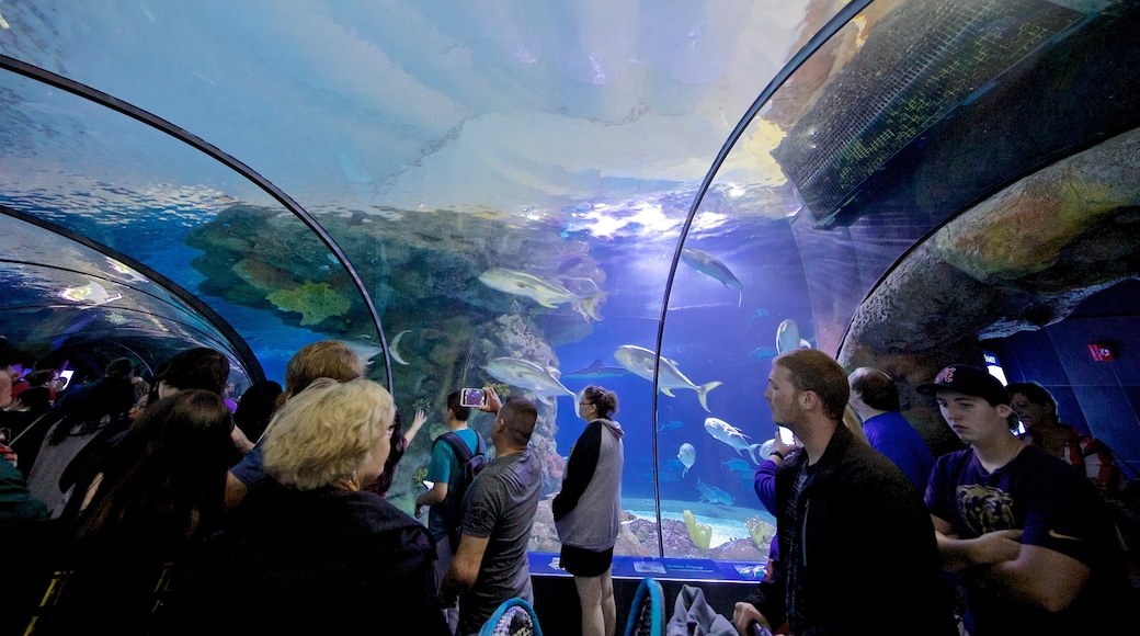 Henry Doorly Zoo showing marine life and interior views as well as a small group of people