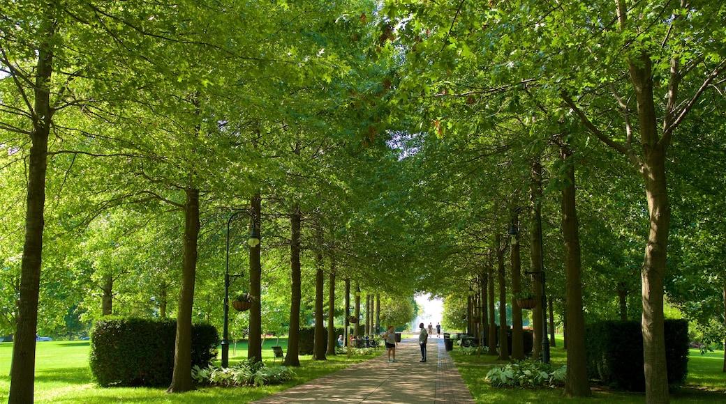 Vander Veer Botanical Park which includes a garden