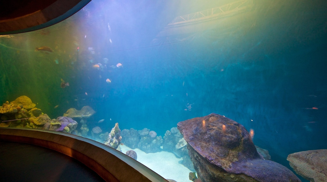 National Mississippi River Museum and Aquarium which includes marine life