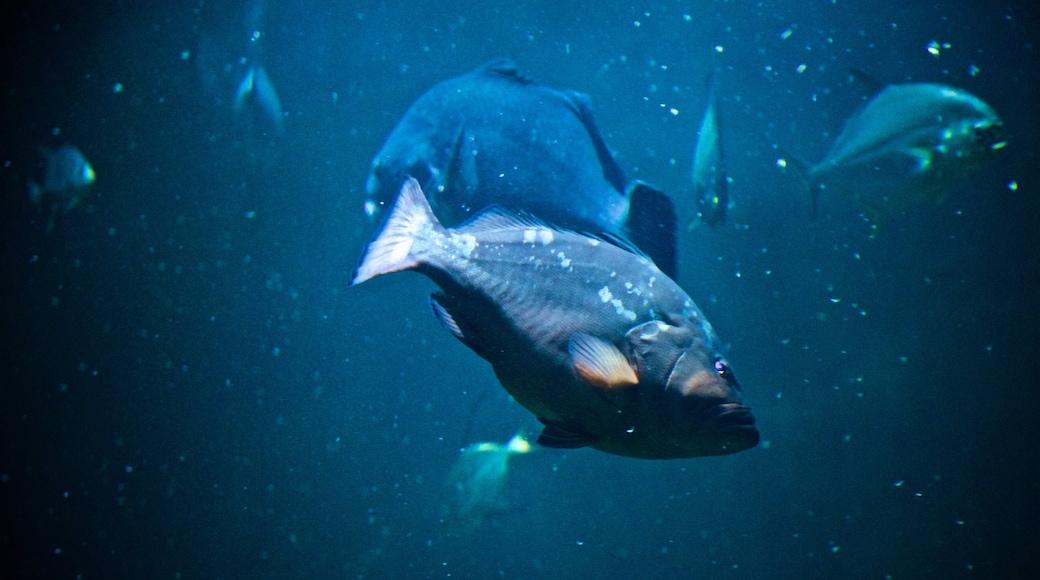 National Mississippi River Museum and Aquarium featuring marine life