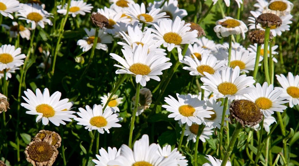 Dubuque Arboretum and Botanical Gardens showing wildflowers