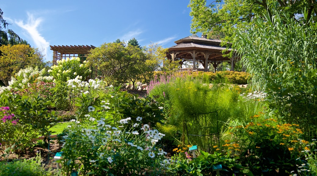 Dubuque Arboretum and Botanical Gardens featuring wildflowers and a park