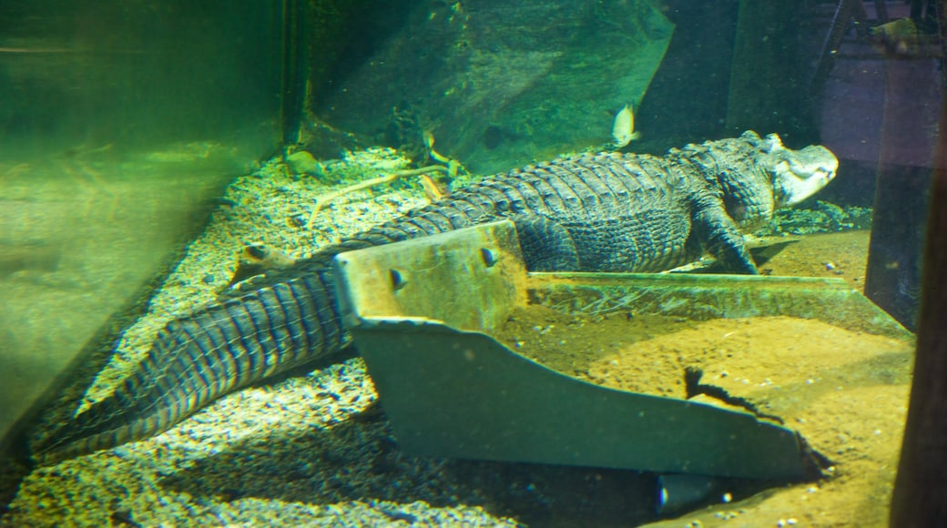 National Mississippi River Museum and Aquarium which includes dangerous animals and marine life