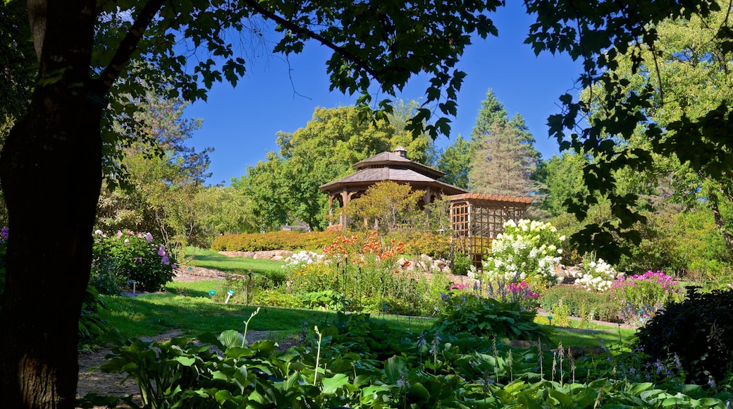 Dubuque Arboretum and Botanical Gardens showing a park and wildflowers