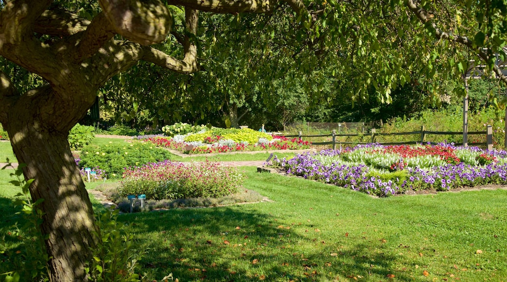 Dubuque Arboretum and Botanical Gardens which includes a park and wildflowers