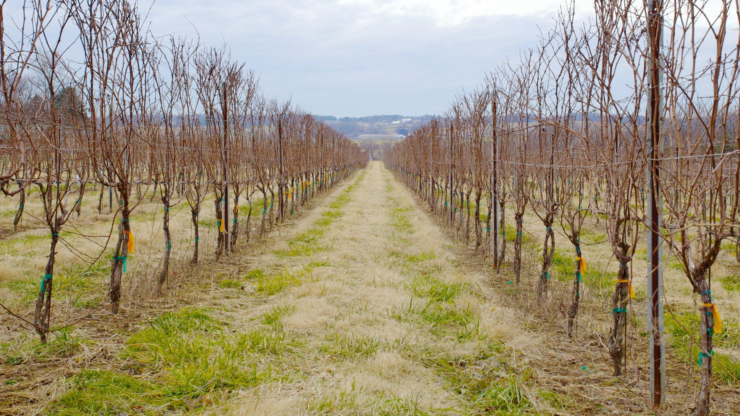 Boordy Vineyards, Hydes, Maryland, Verenigde Staten
