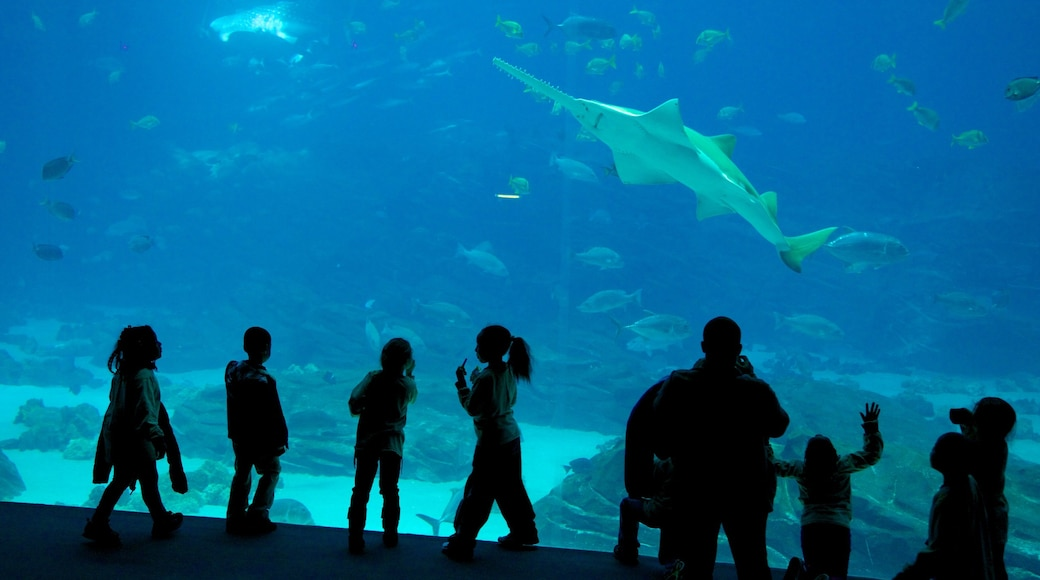 Georgia Aquarium featuring marine life and interior views as well as a large group of people