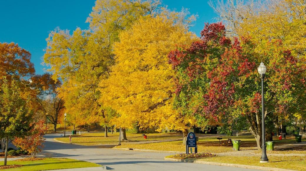 Piedmont Park showing autumn leaves, landscape views and a park