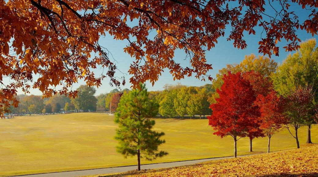Piedmont Park featuring landscape views, autumn leaves and a park