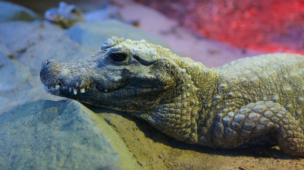 Minnesota Zoo showing zoo animals and dangerous animals