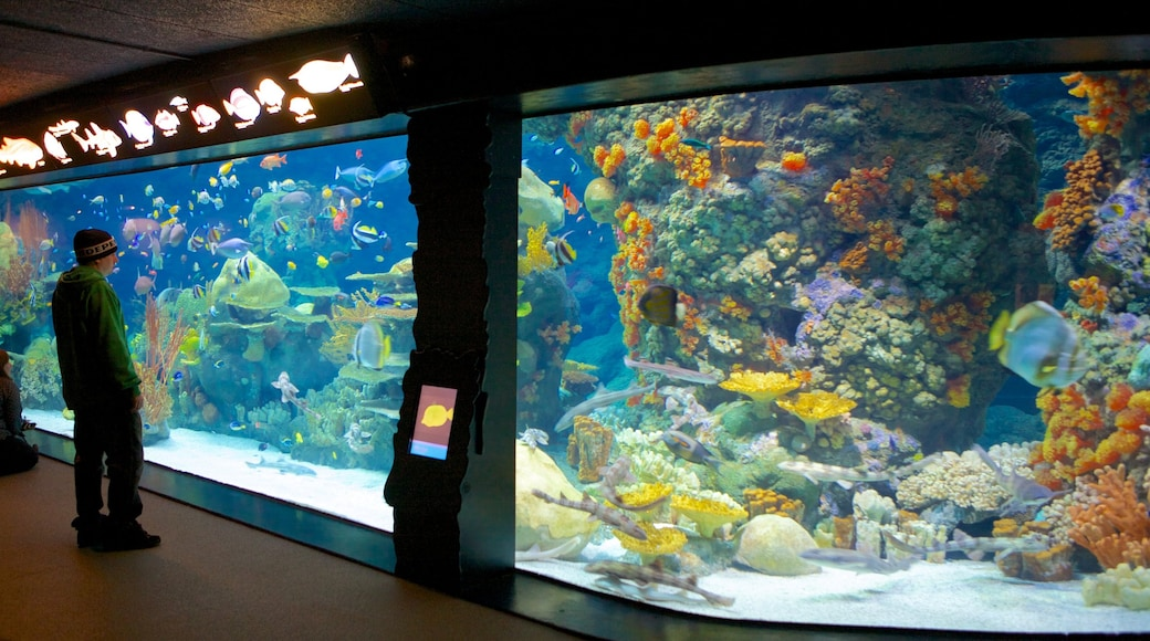 Minnesota Zoo which includes marine life, colourful reefs and zoo animals
