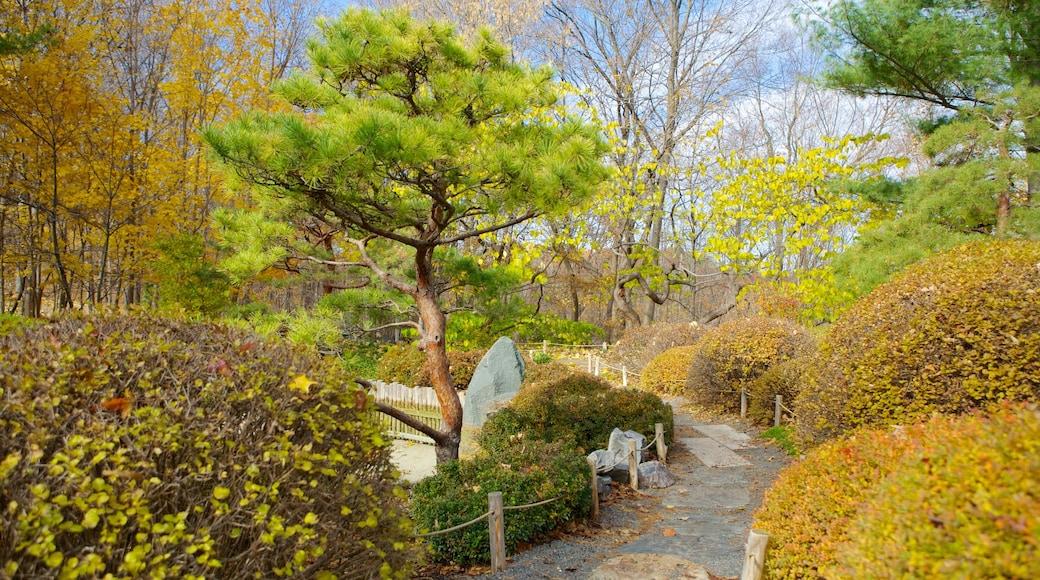 미네소타 수목원 이 포함 풍경, 가을 낙엽 과 정원