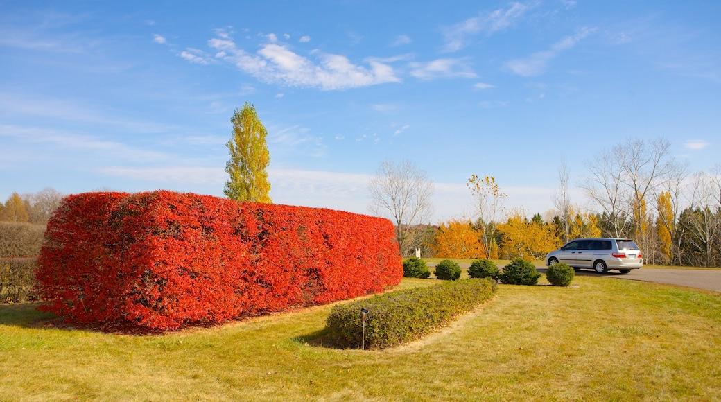Minnesota Landscape Arboretum showing landscape views and a garden