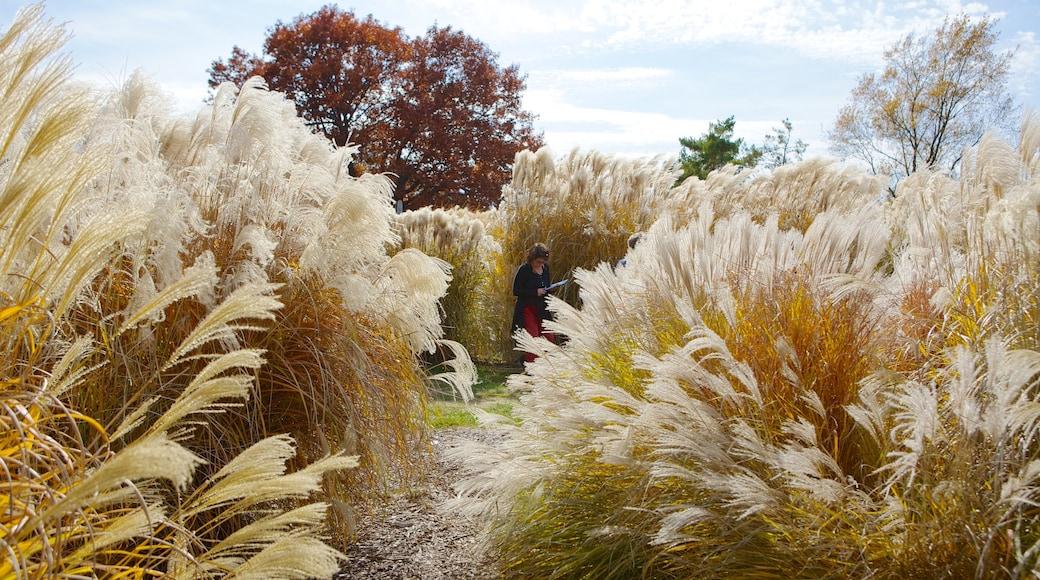 Minnesota Landscape Arboretum featuring landscape views, autumn leaves and a garden
