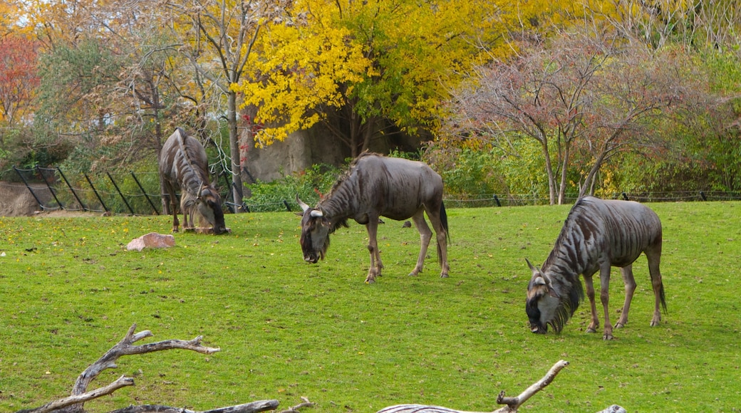 Indianapolis Zoo showing landscape views and zoo animals