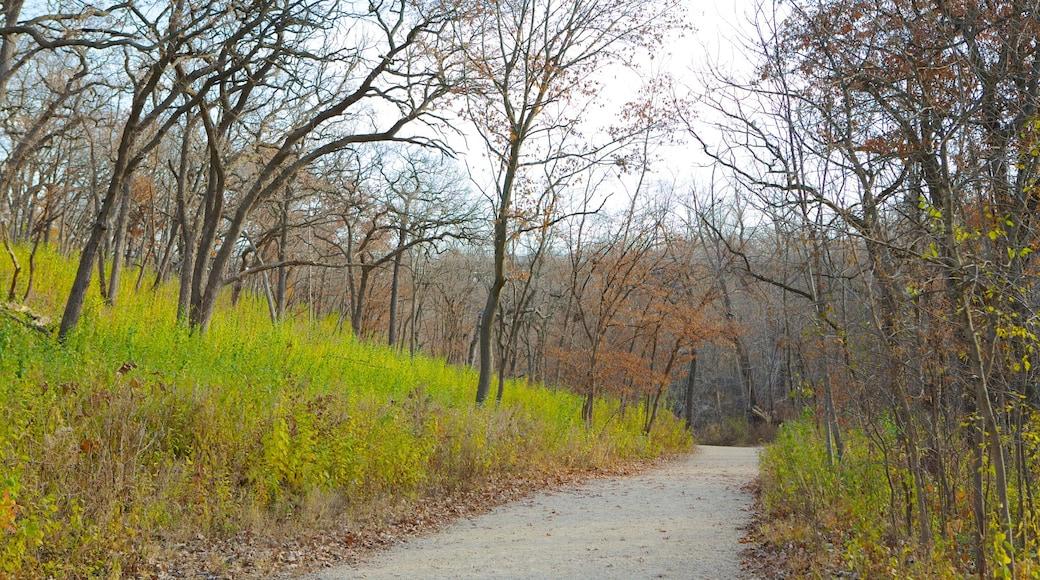 Minnehaha Park showing a park, fall colors and landscape views