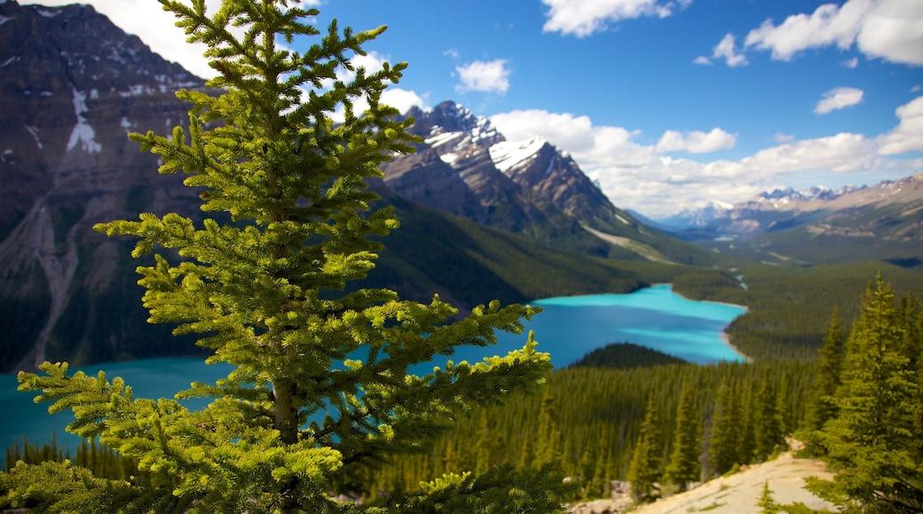 Lago Peyto ofreciendo montañas, vistas de paisajes y un lago o abrevadero