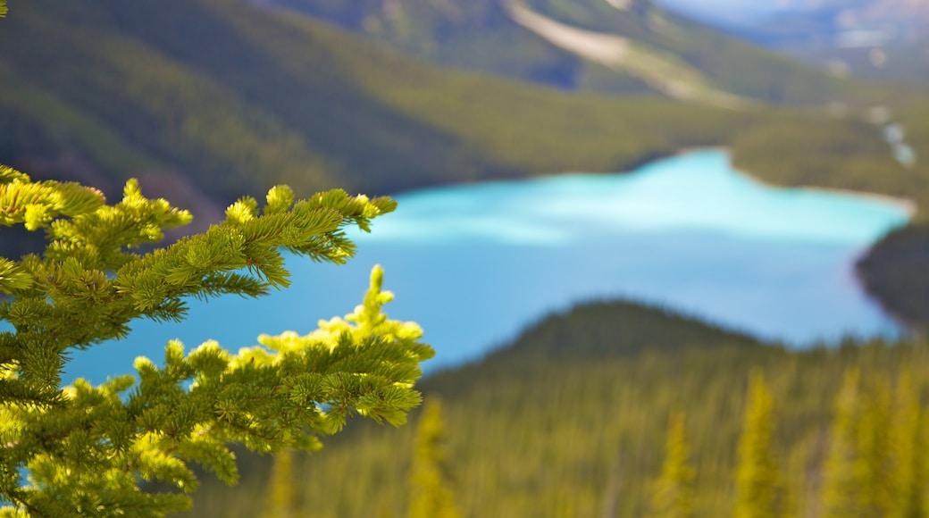 Lago Peyto que incluye un lago o abrevadero, montañas y vistas de paisajes
