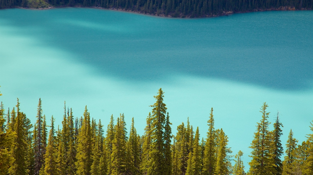Lago Peyto que incluye un lago o abrevadero y vistas de paisajes
