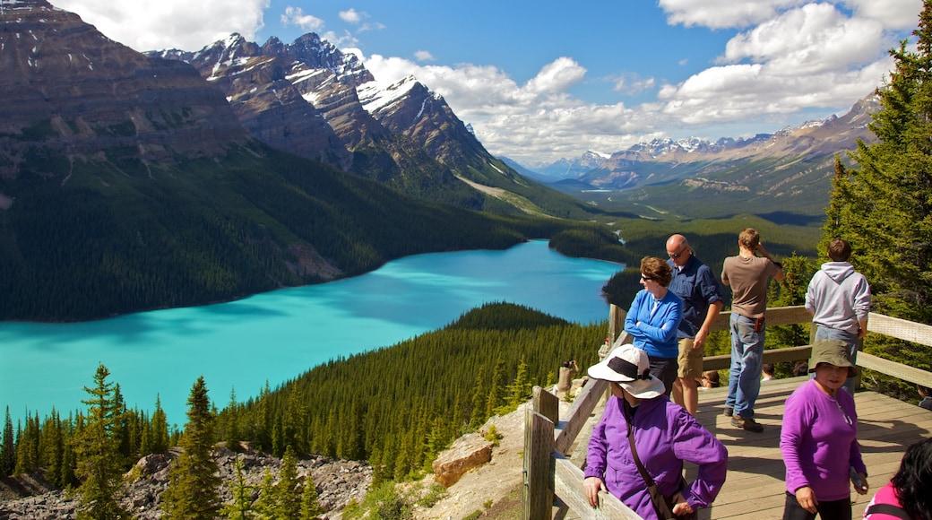 Lago Peyto mostrando vistas de paisajes, vistas y montañas