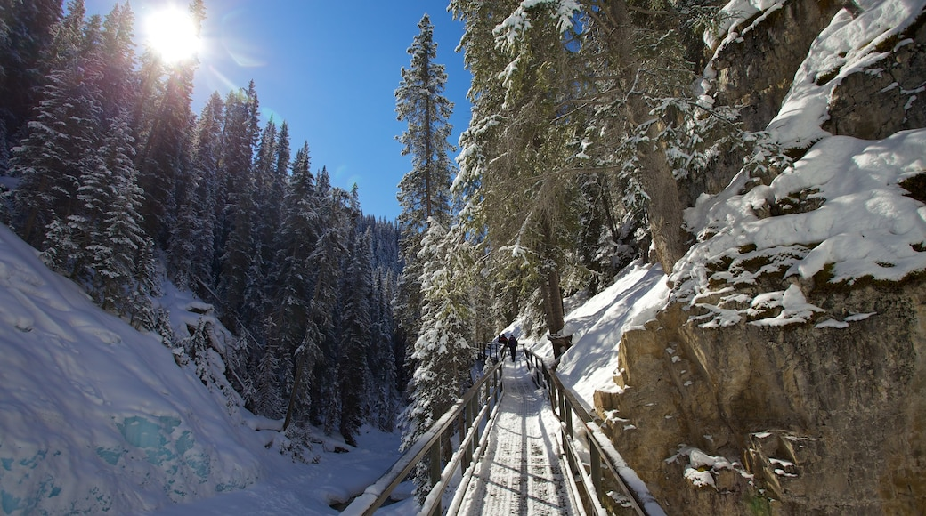 Johnston Canyon showing hiking or walking, a bridge and snow