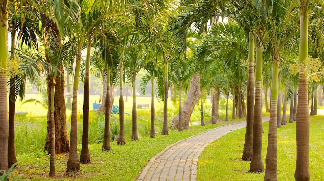 สวนลุมพินี แสดง ทิวทัศน์เขตร้อน, วิวทิวทัศน์ และ สวน