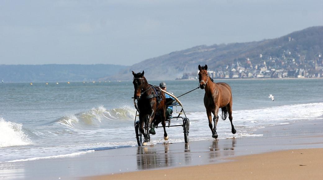 Cabourg mettant en vedette plage de sable, équitation et ville côtière