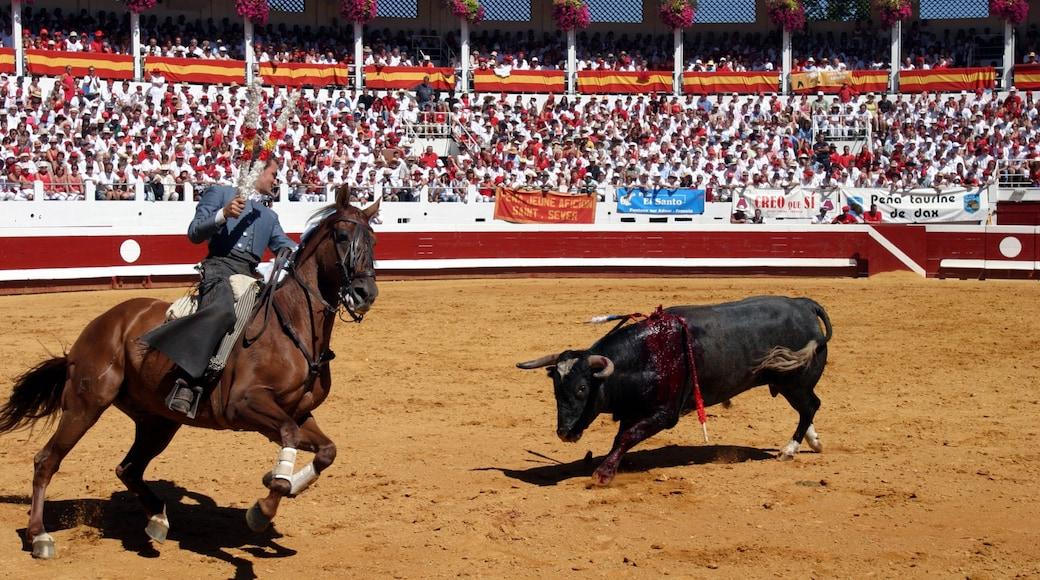 Dax qui includes équitation aussi bien que homme