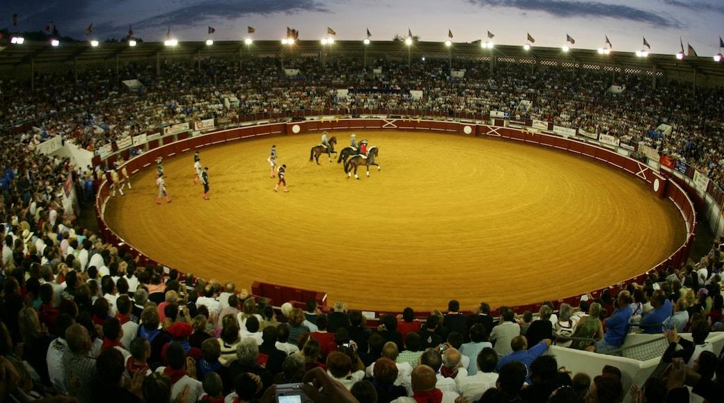 Dax mettant en vedette équitation, arts de la scène et épreuve sportive