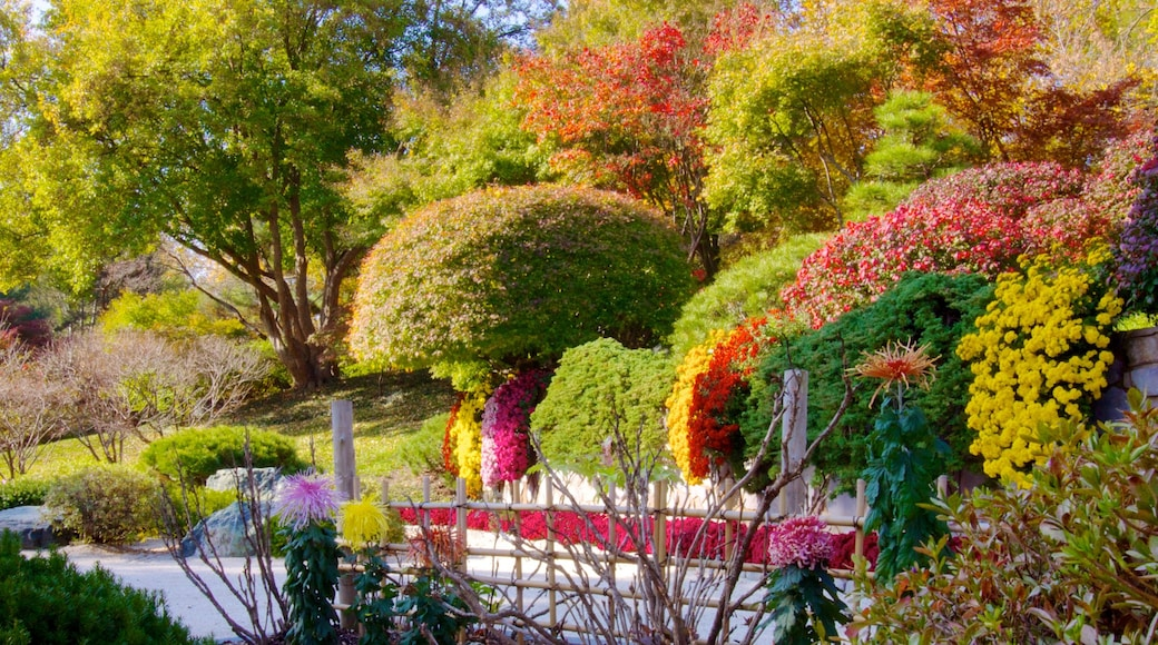 Missouri Botanical Gardens and Arboretum which includes landscape views and a park