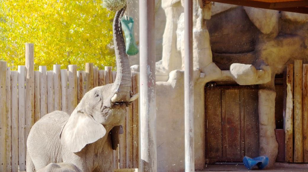 Hogle Zoo caracterizando animais terrestres e animais de zoológico
