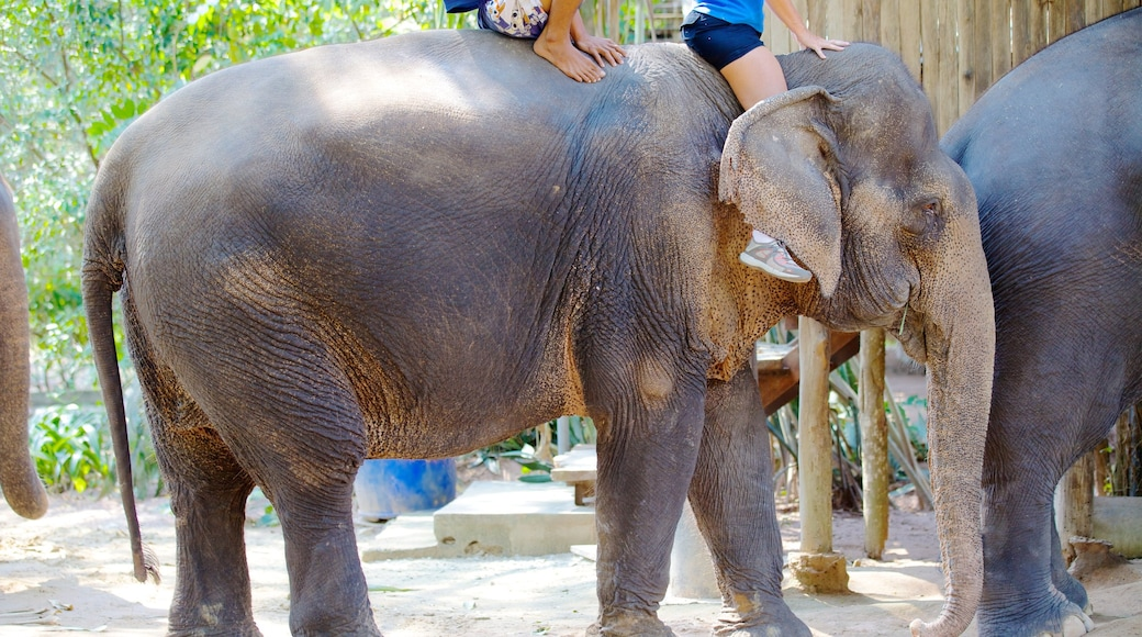 หมู่บ้านช้างพัทยา เนื้อเรื่องที่ สัตว์บก และ สัตว์ในสวนสัตว์