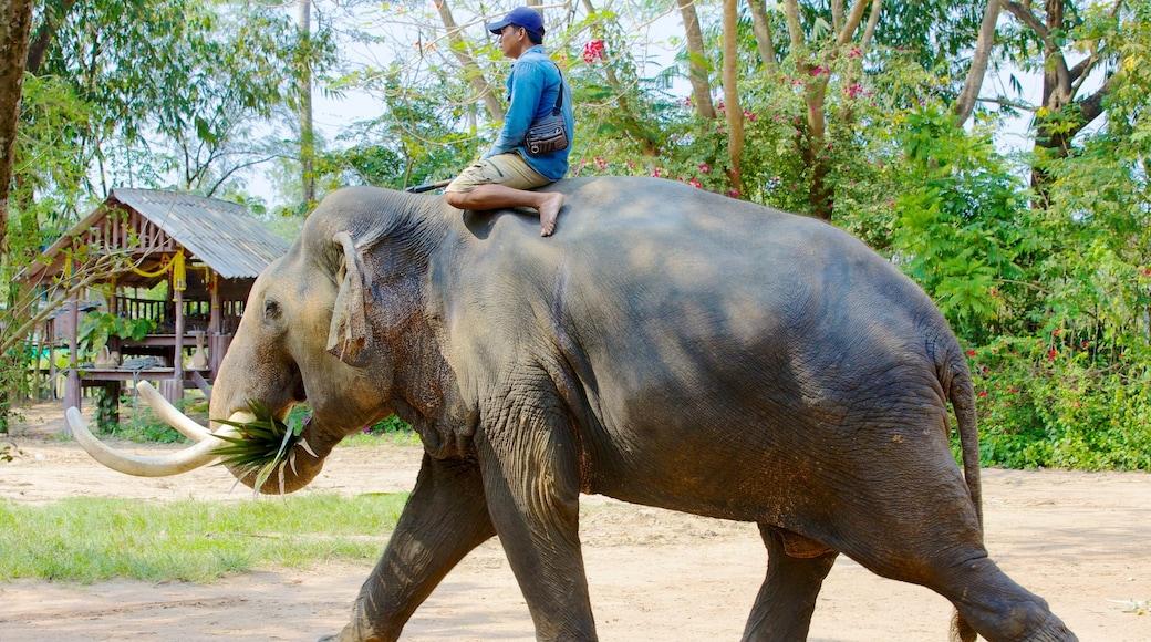 หมู่บ้านช้างพัทยา แสดง สัตว์ในสวนสัตว์, สัตว์บก และ วิวทิวทัศน์