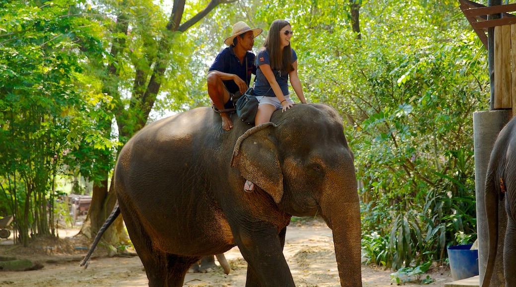 หมู่บ้านช้างพัทยา ซึ่งรวมถึง สัตว์บก, สัตว์ในสวนสัตว์ และ วิวทิวทัศน์