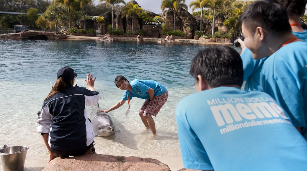 Sea World featuring marine life, a pool and tropical scenes