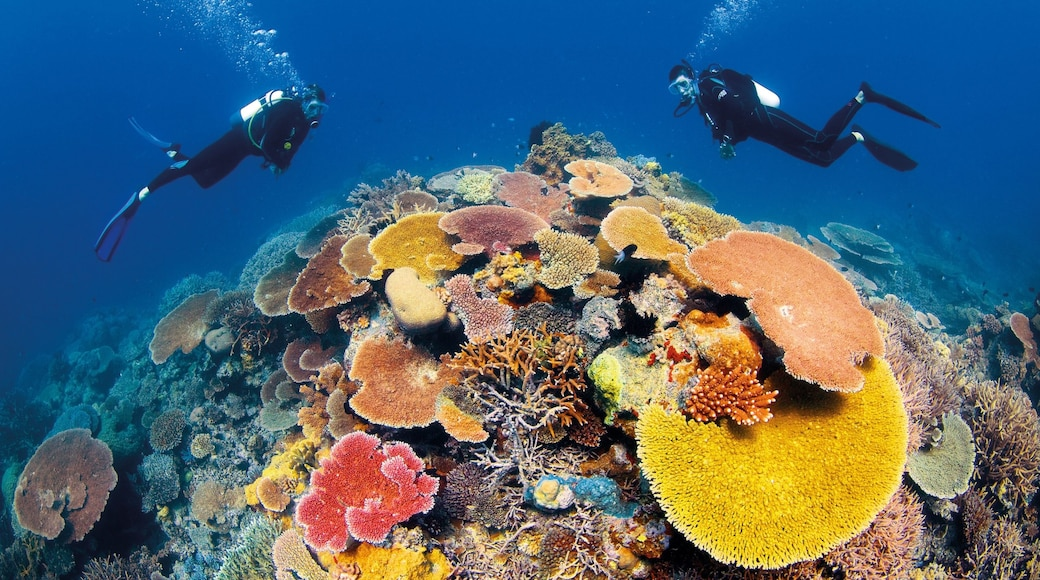 Great Barrier Reef which includes colourful reefs, marine life and scuba diving