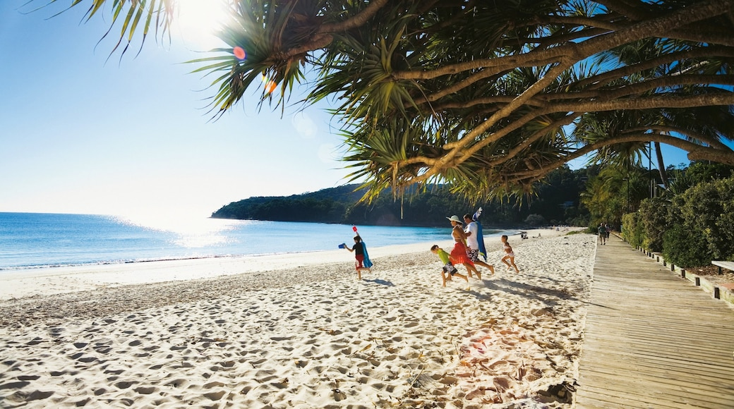 Noosa Heads showing a beach and tropical scenes as well as a family