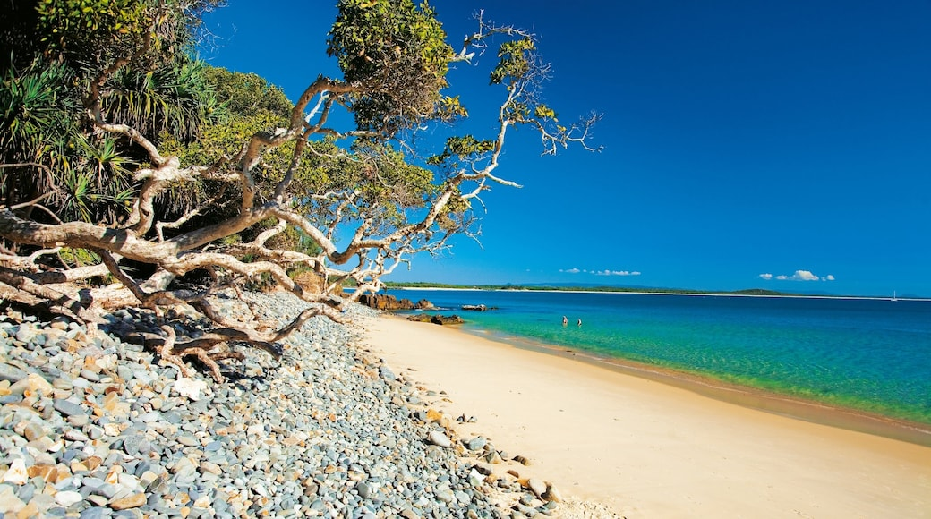 Noosa Heads featuring a beach and tropical scenes