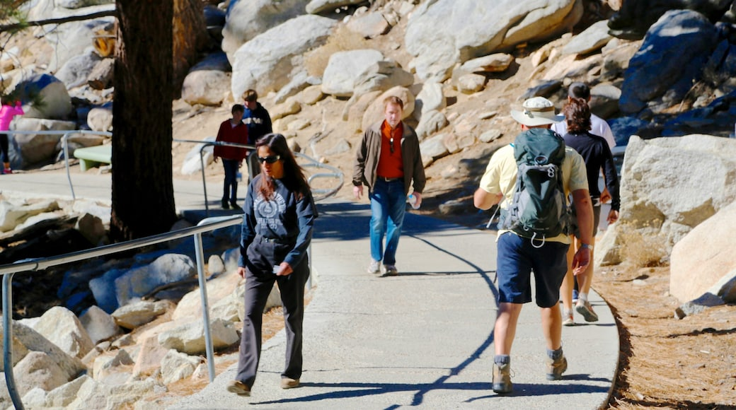Teleférico de Palm Springs mostrando senderismo o caminata y también un pequeño grupo de personas