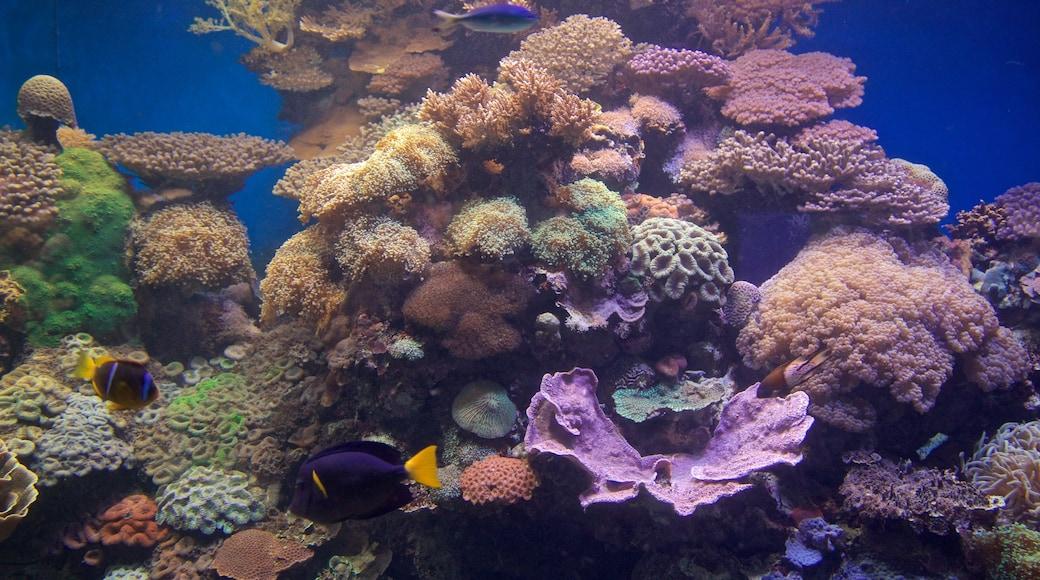 Underwater Observatory Marine Park das einen Korallen und Meeresbewohner