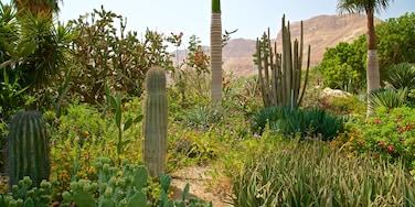 Ein Gedi Botanical Garden featuring wild flowers and a park