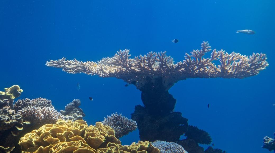 Underwater Observatory Marine Park welches beinhaltet Korallen und Meeresbewohner
