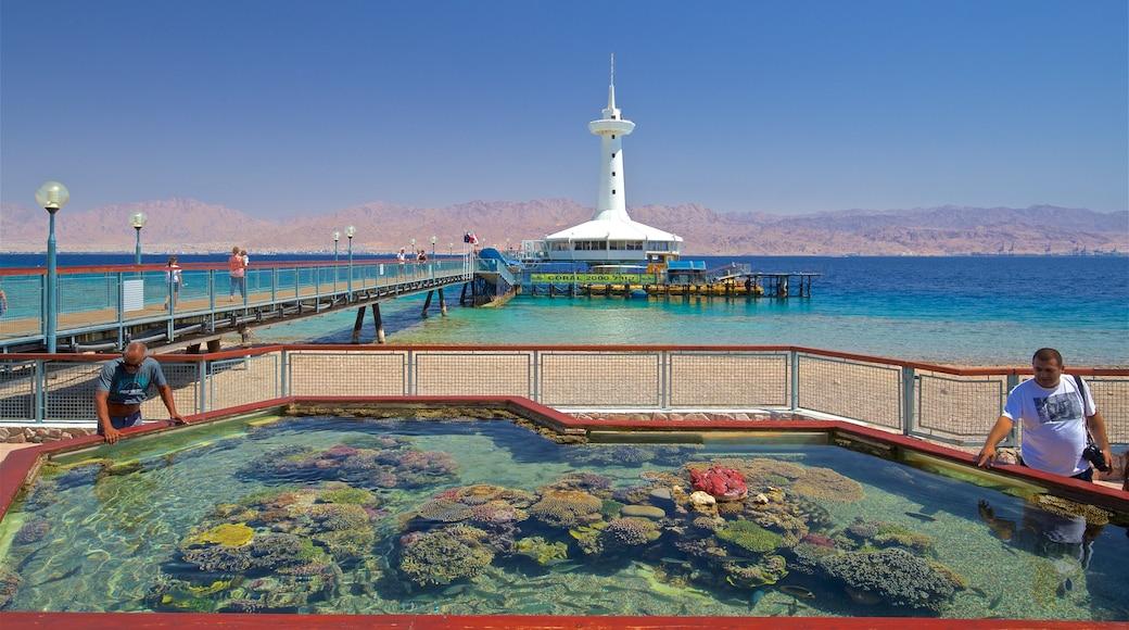 Underwater Observatory Marine Park welches beinhaltet Korallen, allgemeine Küstenansicht und Leuchtturm