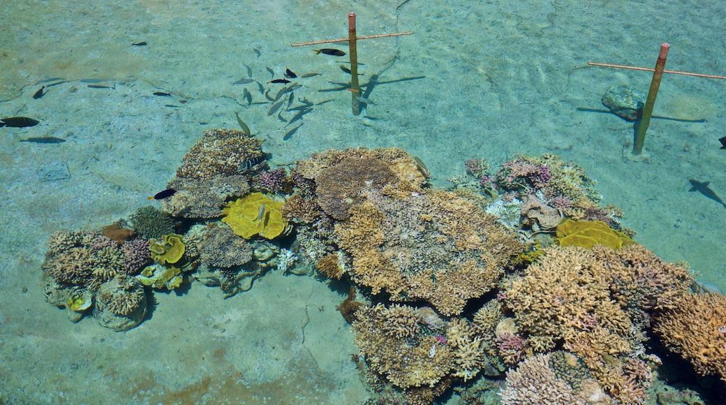 Underwater Observatory Marine Park mit einem farbenfrohe Riffe und Meeresbewohner