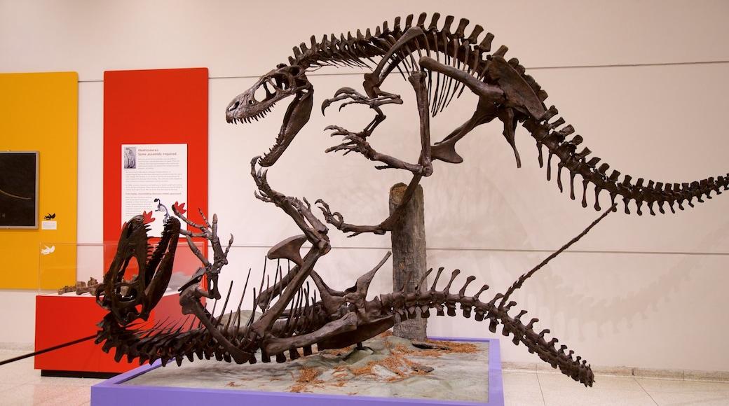 New Jersey State Museum mostrando vistas internas
