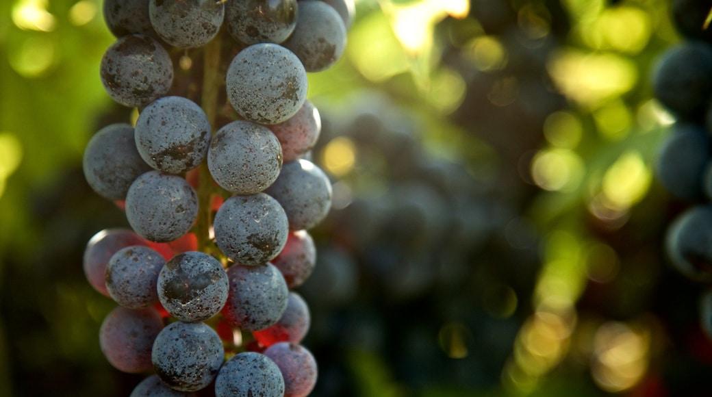 奧利弗釀酒廠 设有 食物 和 農地